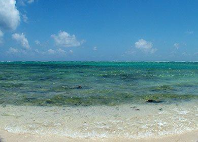A beach and near-shore marine area. Courtesy of Morguefile.
