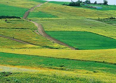 Croplands.