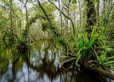 A forested wetland. Courtesy of NPS and Big Cypress.