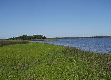 Salt marsh. Courtesy of John Baker.