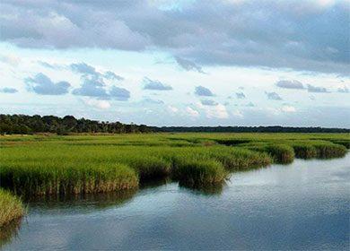 Salt marsh. Courtesy of NPS Audrey Bohl.