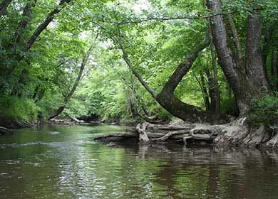 A stream ecosystem. Courtesy of the USFWS.