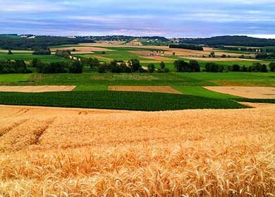 Bio-geoengineering agricultural field can increase the albedo or reflectivity of the Earth.